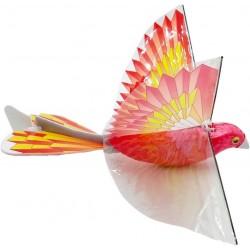 Papagal Zburator cu Aripi Batante Baramae